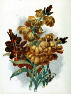 free antique book illustrations of red golden country flowers