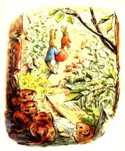 free vintage illustration of beatrix potter benjamin bunny 10