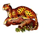 Public domain illustration of Leopard - 19th century scrap paper