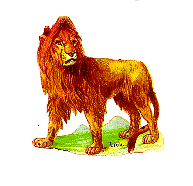 19th Century Lion Illustration in the public domain