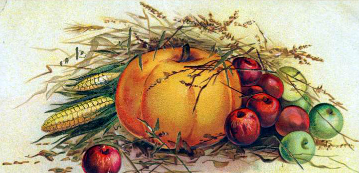 Vintage Pumpkin Illustration From A 19th Century Postcard In The Public Domain