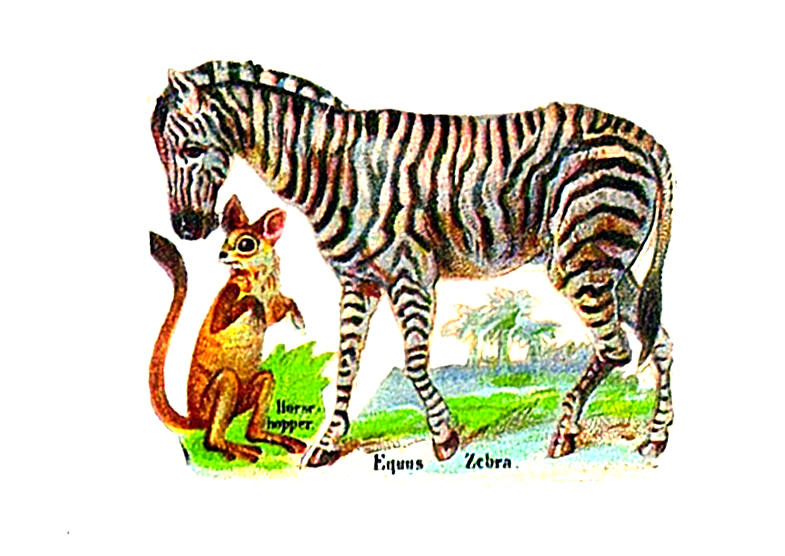 Vintage illustration of zebra originally from cigarette box. 19th century public domain.