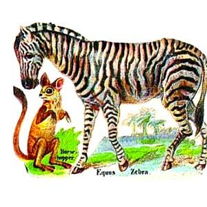 Vintage illustration of zebra originally from cigarette box. 19th century public domain.