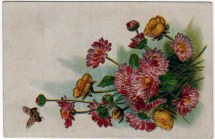 19th 20th century valentines day pictures wildflowers card
