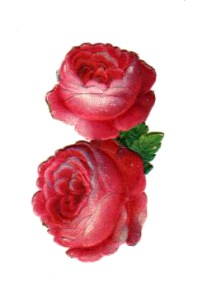 free Free Valentine's Day pictures - vintage illustration of two 19th century paper roses