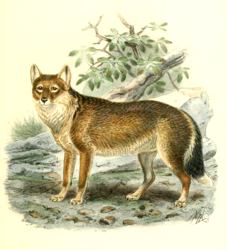 Canine images of a 19th-Century antarctic wolf