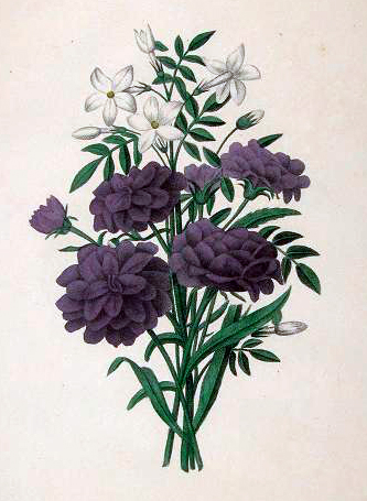 Copyright-free illustrations of purple flowers