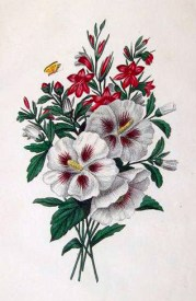 Copyright-free illustrations of spring flowers
