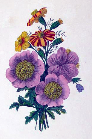 Copyright-free illustrations of vintage french flowers