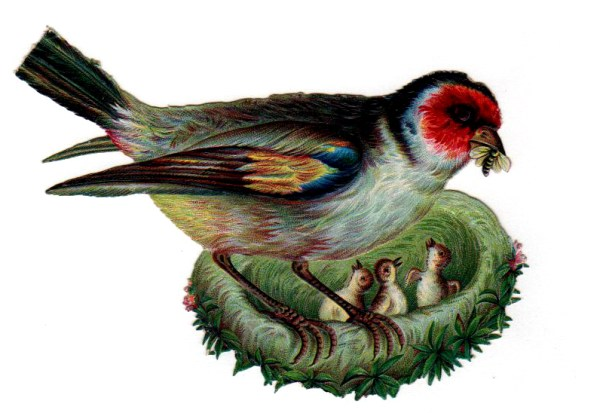 Vintage nature illustrations of mother bird feeding her babies