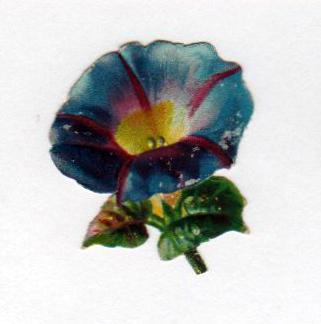 Copyright-free illustrations of petunia flowers