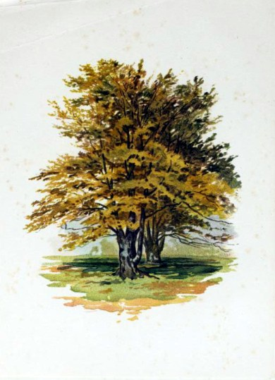 A free golden tree illustration from the public domain