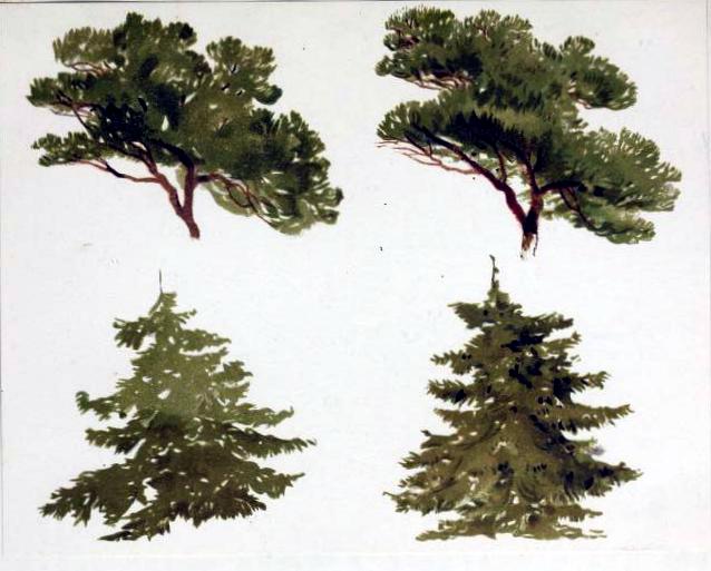 free antique fir tree illustration study