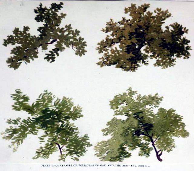 Free tree illustration of oak and ash trees