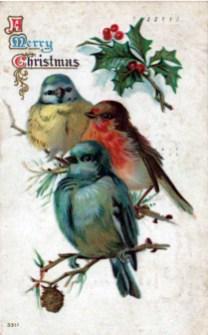 christmas illustration holiday birds
