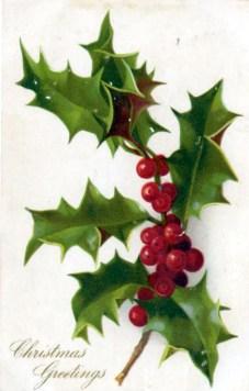christmas illustration holly