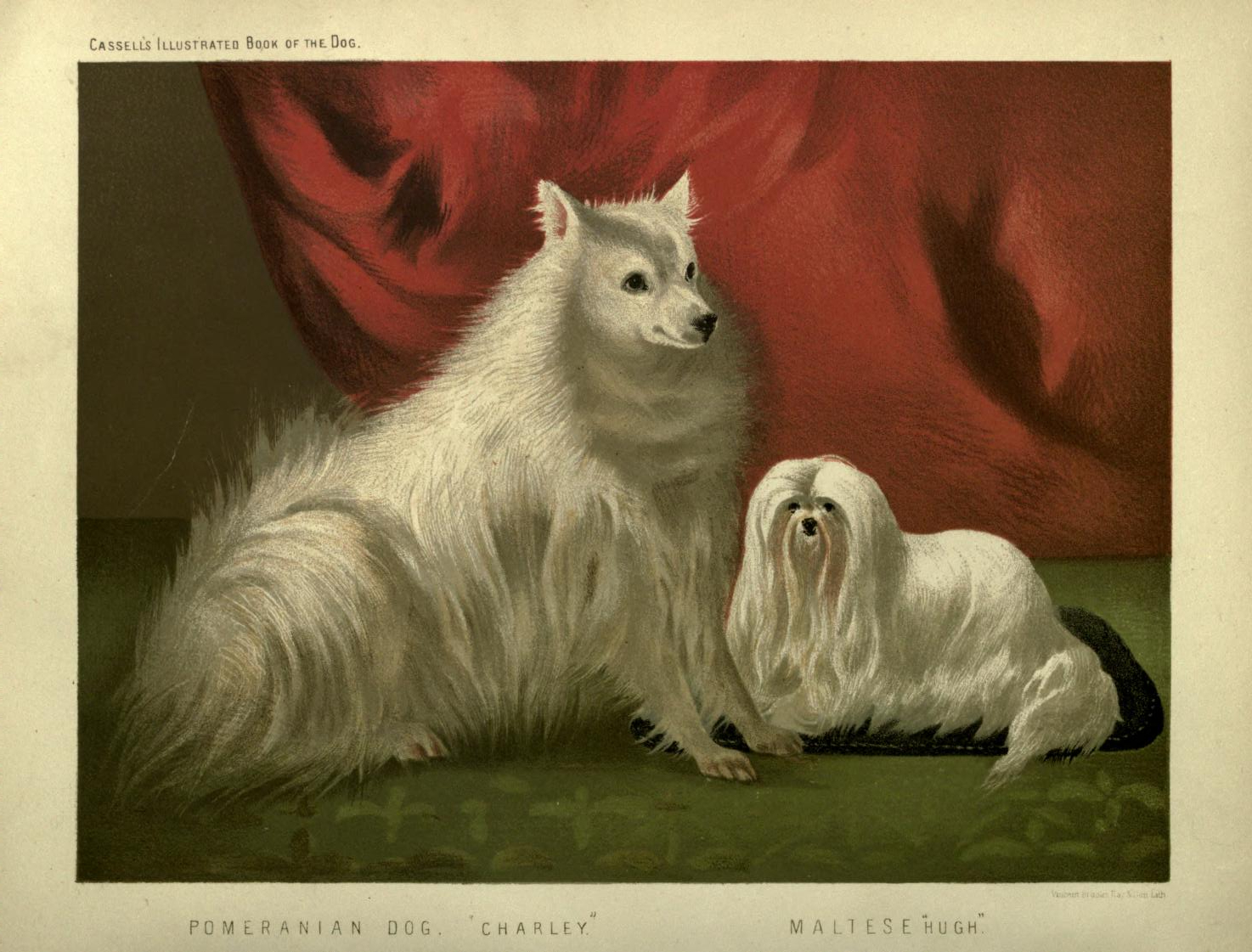 Free vintage Pomeranian illustration public domain.