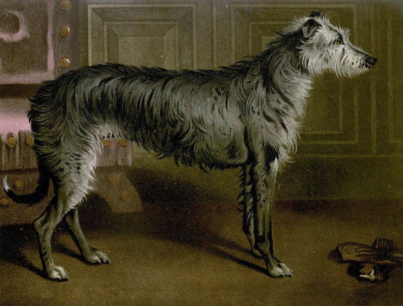 Free vintage deerhound illustration public domain.