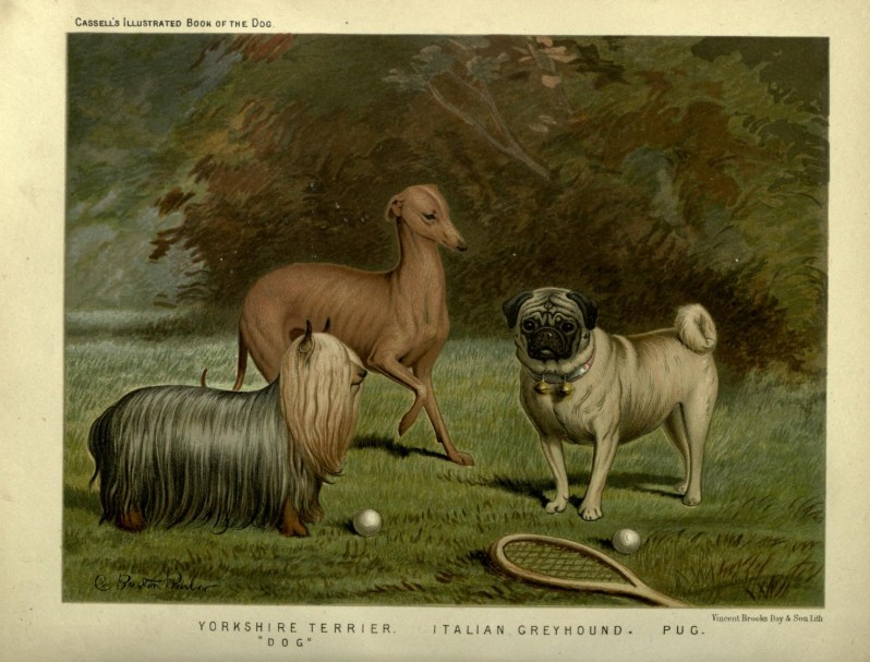 Free vintage little dogs illustration public domain.
