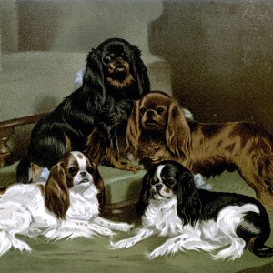 Free vintage toy spaniels illustration public domain.