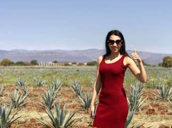 Agave Plantations in the tequila tour by Free Walking Tour Mexico