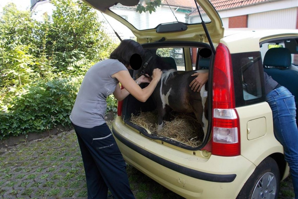 150805-pony-in-trunk-jpo-525a_bdffbb399d3ad70aa796ec638ebe25b3.nbcnews-fp-1200-800