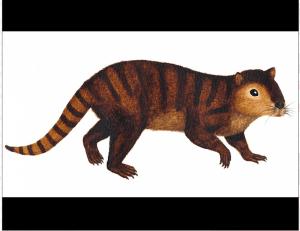 Kimbetopsalis simmonsaeCredit: Sarah Shelly | U N-L