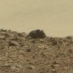 photo credit: Could this be a Martian mouse? NASA/JPL-Caltech/MSSS