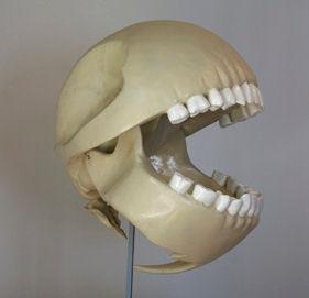 PacMan skelet