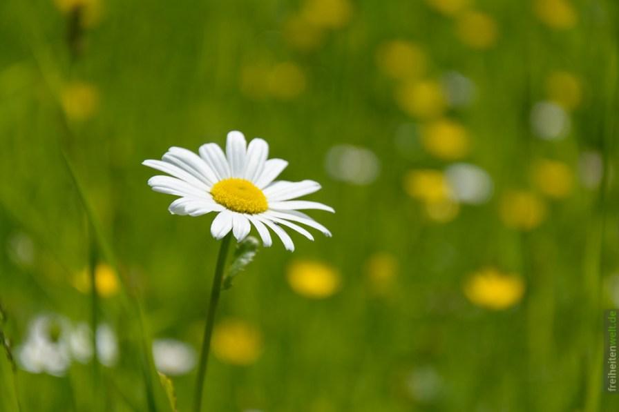 Blume Hesselberg