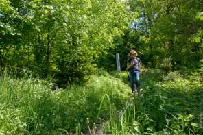 Im dichten Wald um den Hesselberg