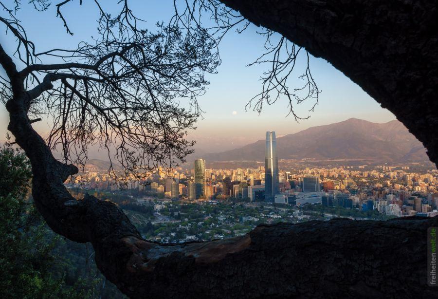 Baum und Santiago