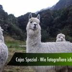 Cajas Spezial – wie fotografiere ich Lamas