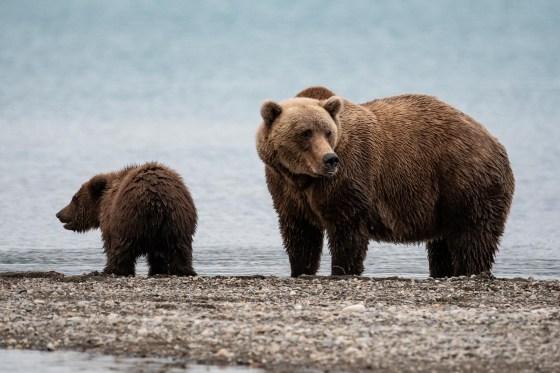 Bär und Kind Katmai