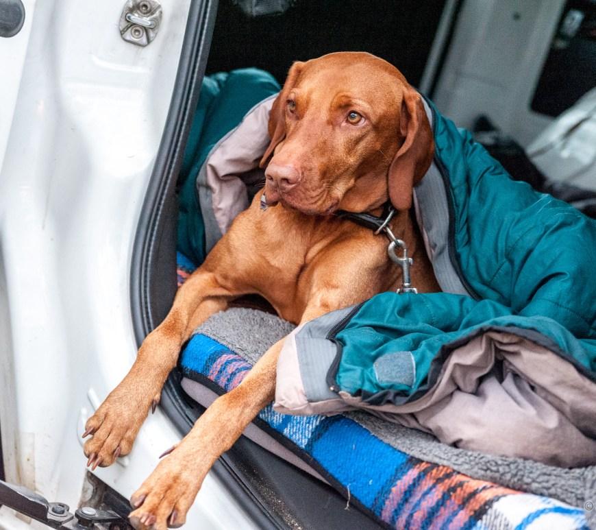 Der Hund (Kafka) im Freiheitsmobil