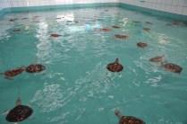 04. Turtle Release - nursery