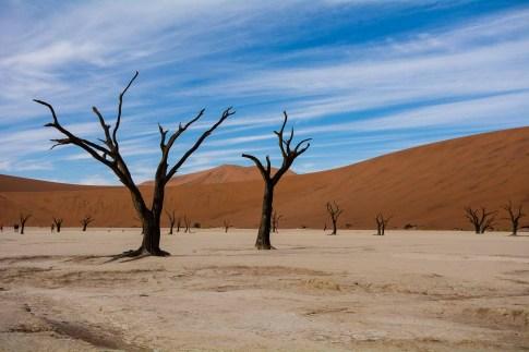 Tote Bäume bei Deadvlei in der Namib