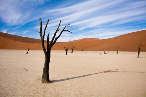 Toter Baum bei Deadvlei in der Namib