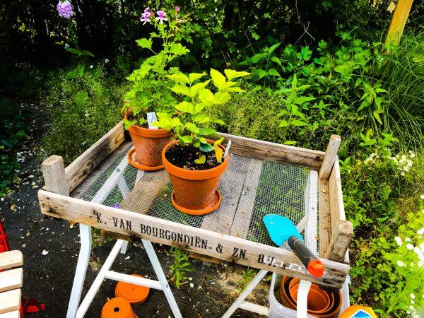 Unser DIY Pflanztisch