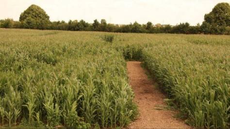 Das Maislabyrinth