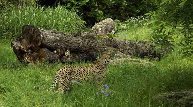 Kölner Zoo: Eintrittskarten mit 44% Rabatt