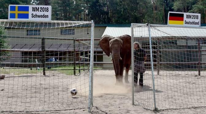 Nach Auftaktschwäche: Elefantenmädchen Nelly tippt auf deutschen Sieg gegen Schweden!