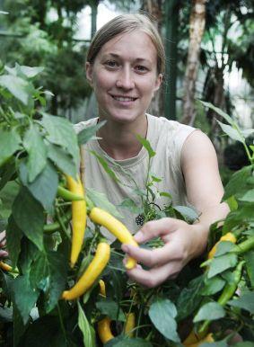 """Täglich muss Gärtnerin Fenja Krüger in der Sonderschau nach dem Rechten sehen. Hier kontrolliert sie die Sorte """"Yellow Pepper"""". - Foto: Wilhelma"""