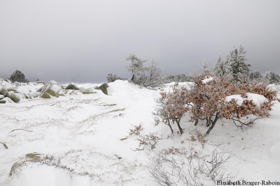 neige sur le Mont Lozère