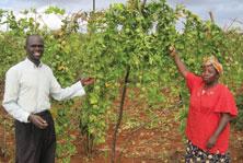 Nigeria Agriculture