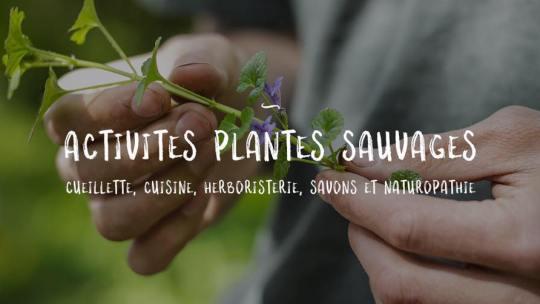 Comment survivre dans la nature grâce aux plantes