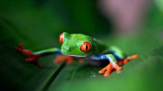 Que faire au Costa Rica ?