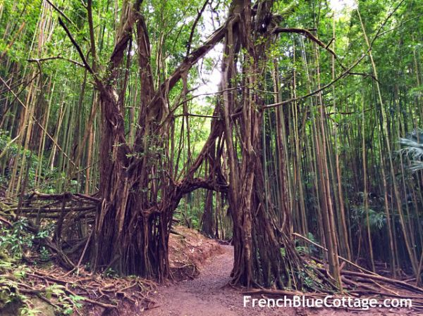 manoa hike hawaii_opt