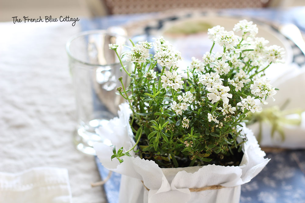 White potted flowers; an easy centerpiece for the Easter table.