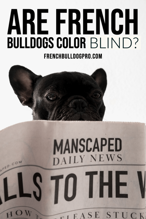 are french bulldogs color blind